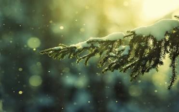christmas-wallpaper-tumblr-49877036